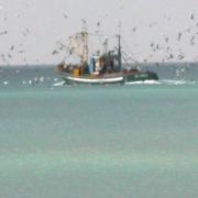 johnathan-livingstone-seagull